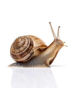 Protecting skincare numelab switzerland snail mucin