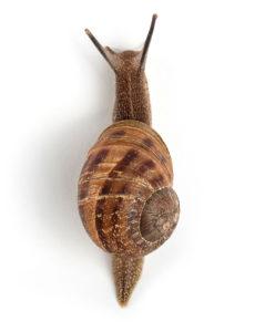 snail mucin acne numelab skincare